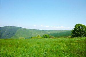 2012今年の賢治の森-004