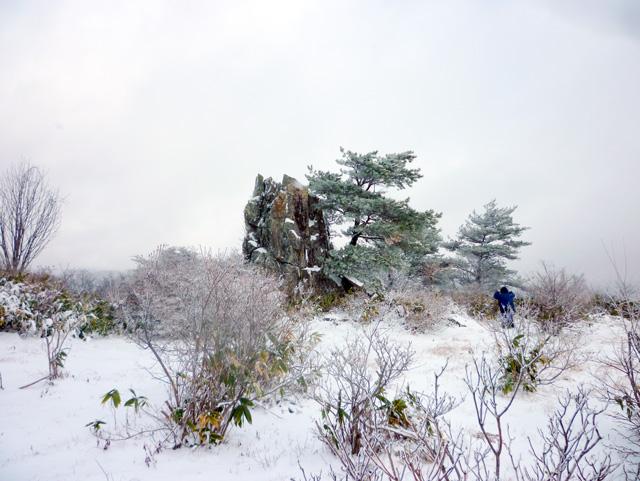 賢治の森整備