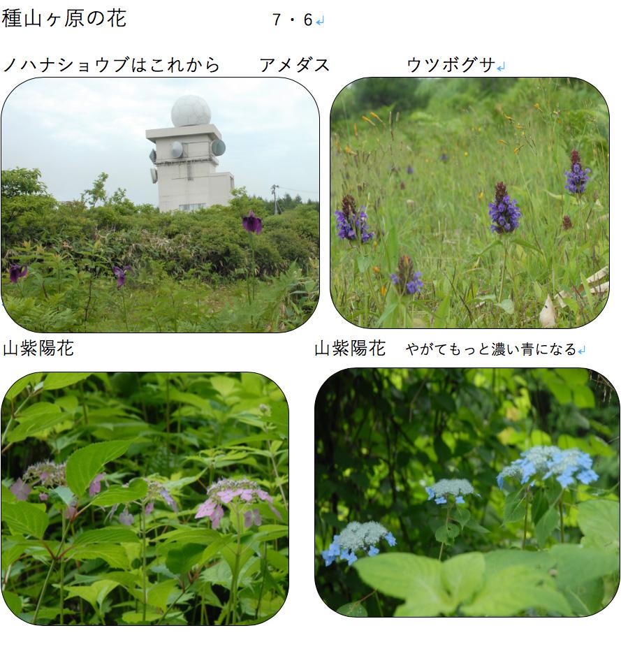 種山ヶ原の花