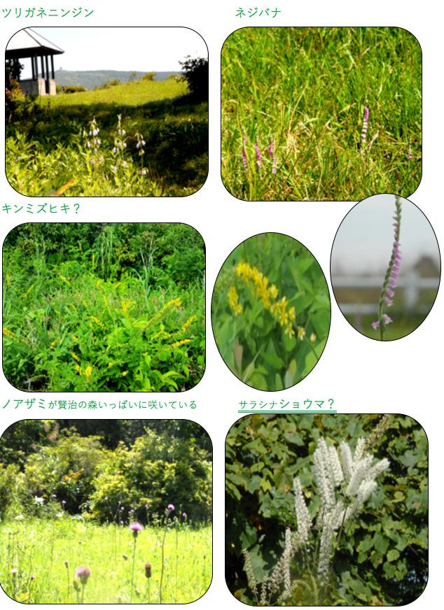 種山ヶ原の草花